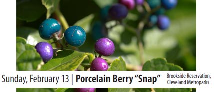 Porcelain Berry Snap 2/13/11